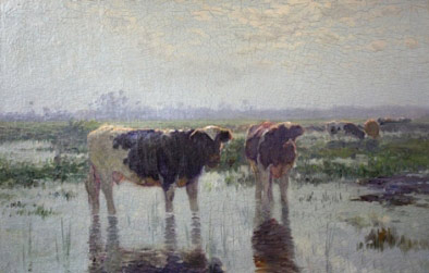 Cows - After